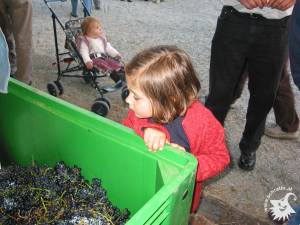 20031002-Weinpressen-06